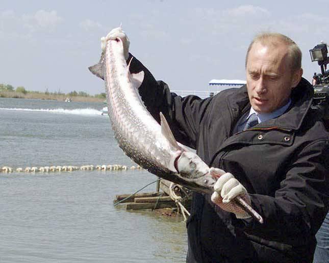 Прохорово, Чеховский какой рыба можно выращивать в таджикистане чистая обувь снится